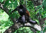 Costa Rica Raicesticos Bienes Raices Costa Rica Propiedades Aquiler